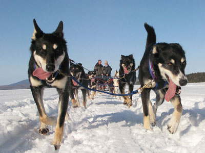 New England Dogsledding